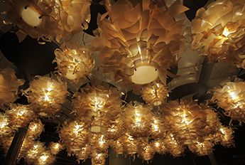 Dahlia Clusters - Restaurant